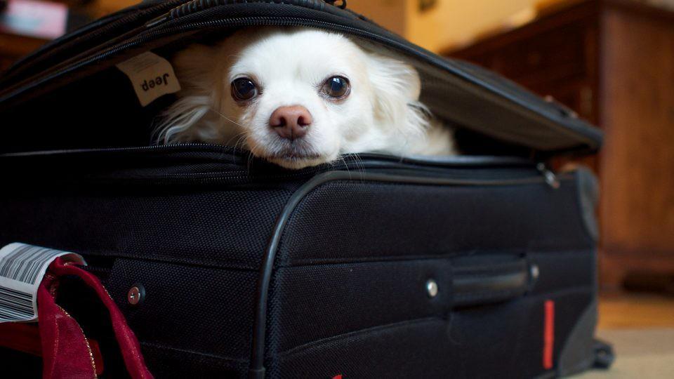 Viagem Internacional com cachorro